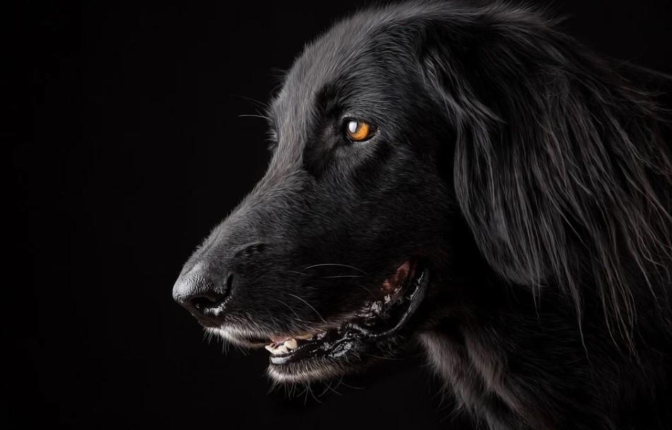 Иркутянин убил семейную пару из-за своих собак