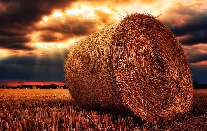 Житель Бурятии украл две тонны сена