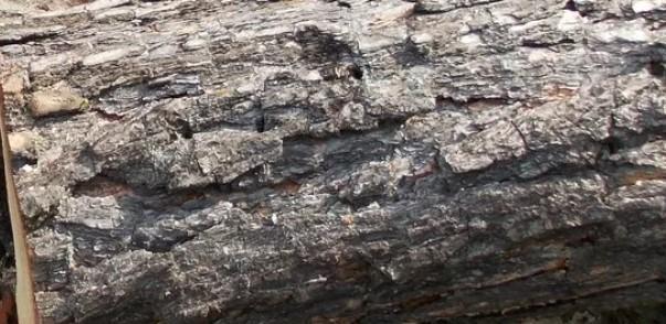 В Бурятии поймали 19-летнего «чёрного» лесоруба