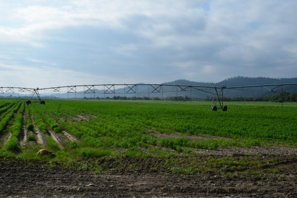 Агрономы Бурятии осваивают новые технологии