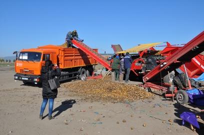 Фермеры: Бурятии местного картофеля в этом году не хватит