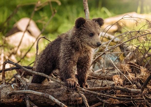 Улан-удэнцы на «тропе здоровья» встретили медвежонка
