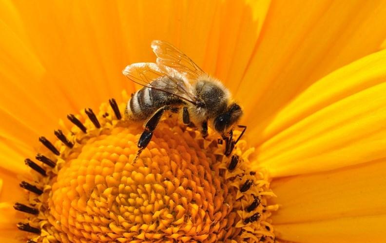 В Бурятии массово гибнут пчёлы