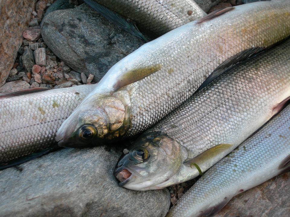 У омулёвых браконьеров в Бурятии изъяли лодки