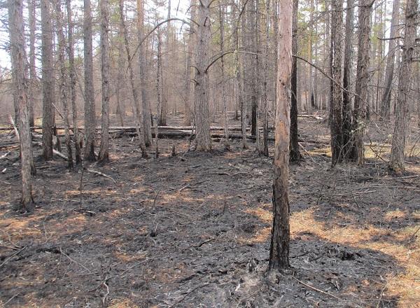 В Бурятии уже сожгли леса на 53 млн рублей
