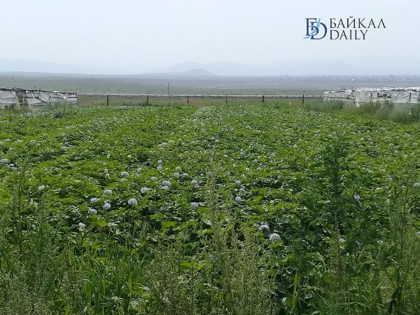 Наговицын: Фермерам разрешат строить жильё на землях сельхозназначения