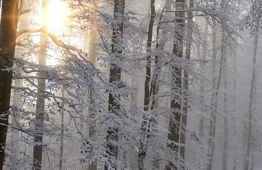 В Иркутской области нашли заблудившихся геодезистов