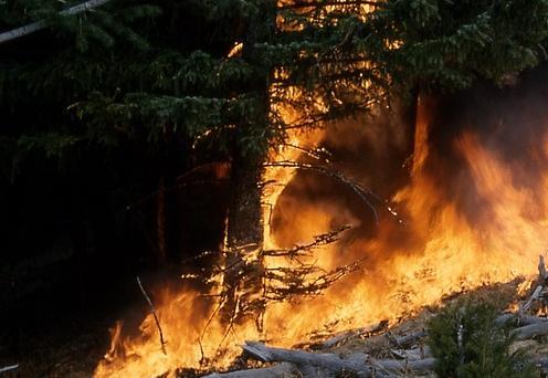 Лесоустроителей спасли из огненного кольца в Иркутской области