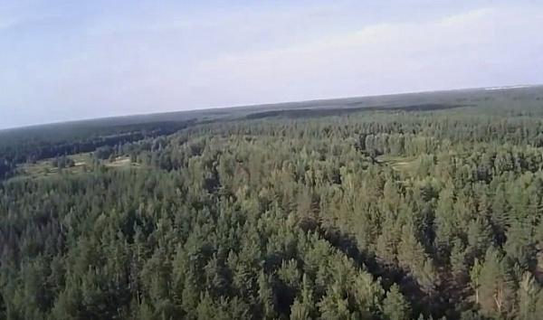Лесистость Иркутской области планируют сохранить на уровне 82%