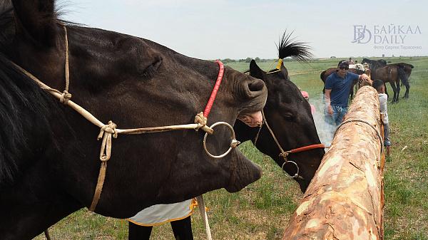 Приставам Бурятии пришлось искать лошадь в полях