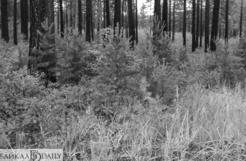 В Улан-Удэ в лесу нашли мёртвого мужчину