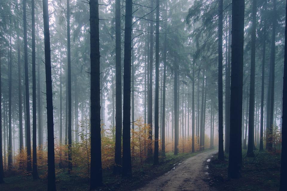 В Бурятии сборщик дикоросов 5 дней плутал в тайге