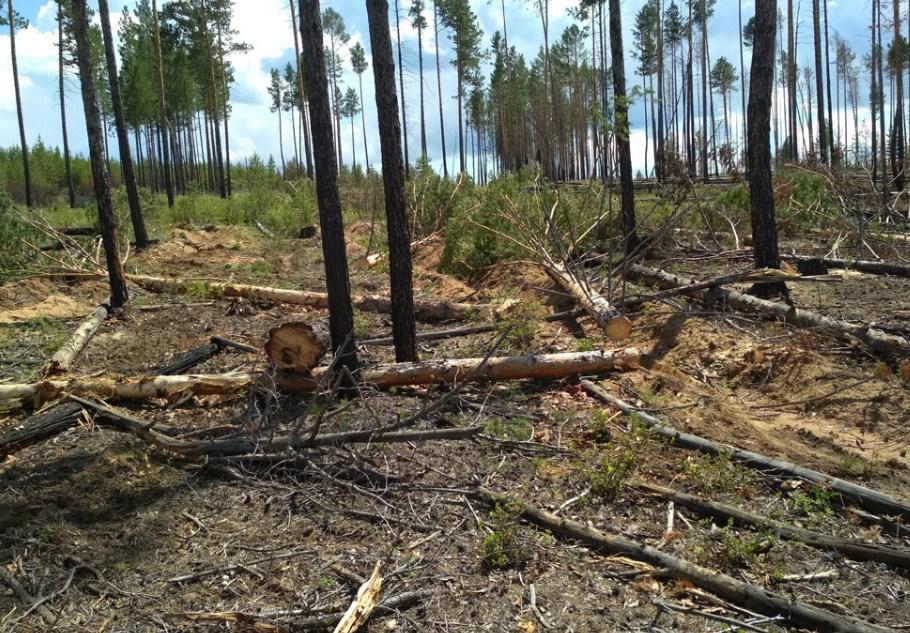 В Улан-Удэ раскрыли подробности обысков в агентстве лесного хозяйства