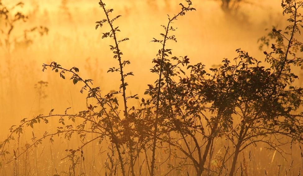 В Бурятии сельхозземля заросла кустарниками