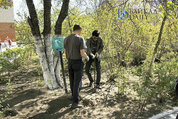 В Улан-Удэ появится питомник для озеленения города
