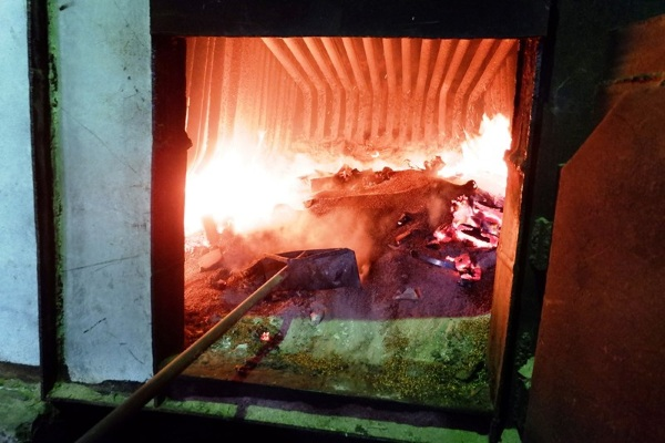 В Иркутске сожгли 5 тонн заражённых семян