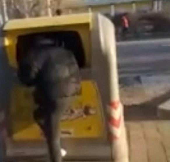 В центре Улан-Удэ пьяные подростки «ныряли» в мусорные баки. Видео