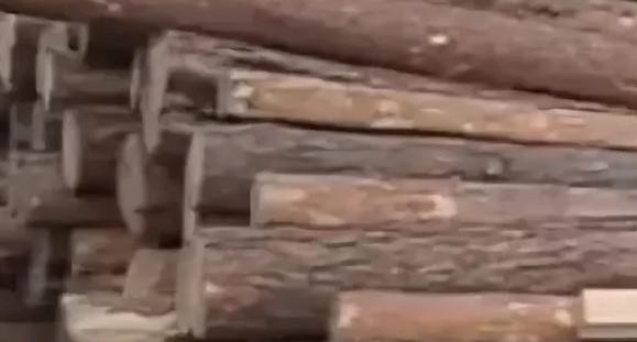 В Иркутской области отправили за решётку контрабандиста леса