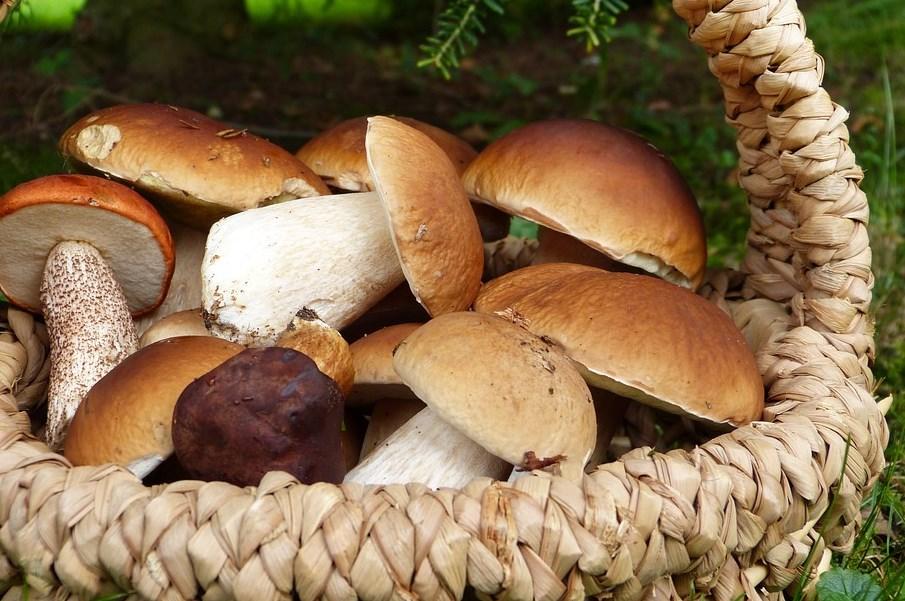 В Бурятии всё чаще теряются грибники