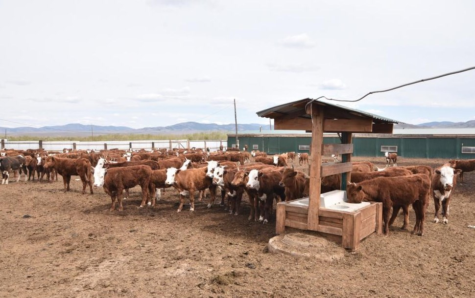 В Бурятии фермерам хотят облегчить выделение леса для стоянок