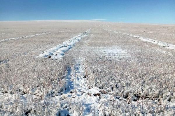 В Забайкалье ввели режим ЧС из-за гибели сельхозкультур