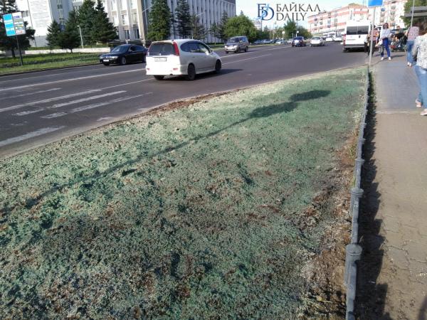 Власти Улан-Удэ отчитались о посадке газонной травы