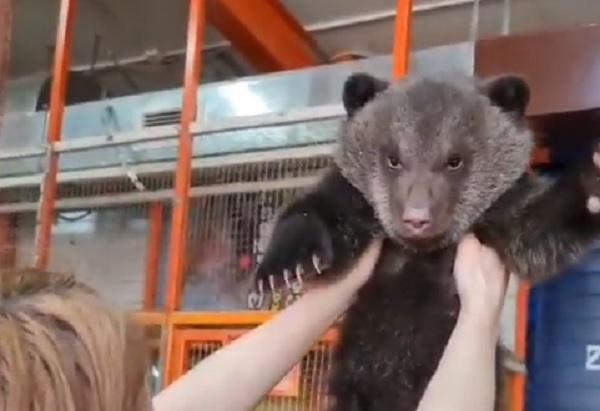 В зоопарке в Иркутске приютили трёх осиротевших медвежат