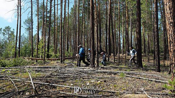 В Иркутской области работнику лесхоза выписали 16 «липовых» штрафов