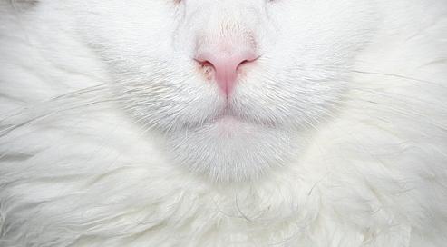 В Сибири неизвестный застрелил домашнего кота