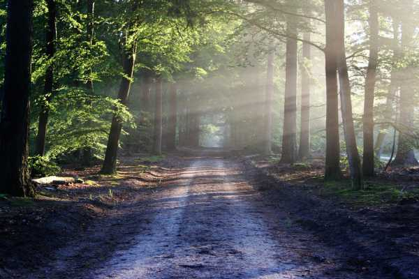 В лесах Иркутской области отменили режим ЧС