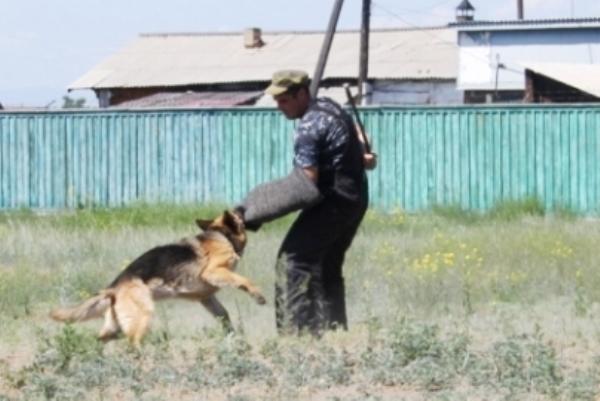 знакомим детей со служебными собаками