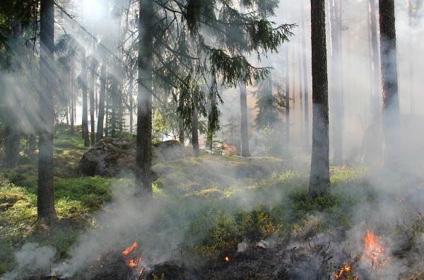 В Бурятии потушили 11 лесных пожаров