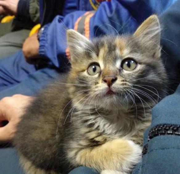 Найденного в Тулуне котёнка спасатели увезут с собой в Иркутск