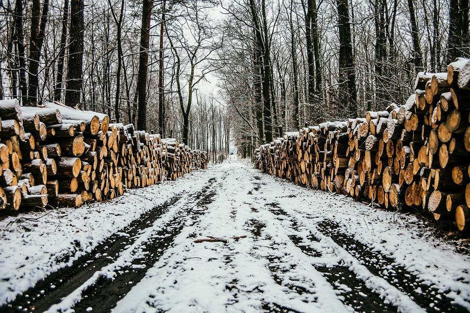 В Бурятии у лесоруба из Хурумши изъяли КамАЗ и трактор