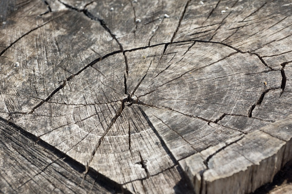На предприятиях Улан-Удэ хранилась заражённая древесина