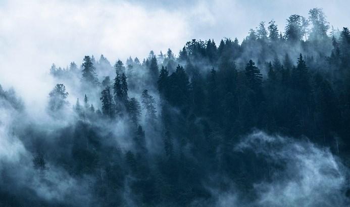 Скандальную «МТК-Дженькей» пустят в леса Бурятии после вложения 700 миллионов