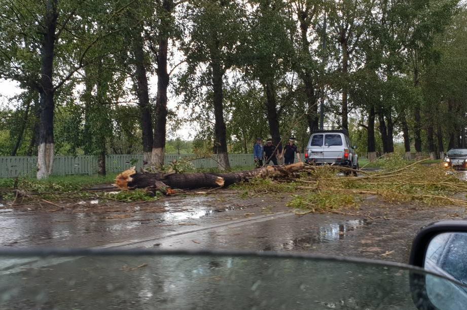 В Улан-Удэ во время дождя дерево упало на дорогу