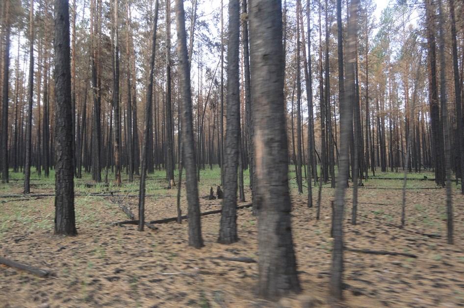 В Бурятии обследовали сгоревшие леса