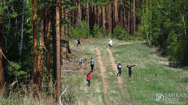 Матвиенко: «Преступный теневой сектор рулит лесной отраслью»