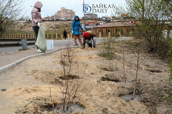 Новенькие деревца будут поливаться в Улан-Удэ еженедельно
