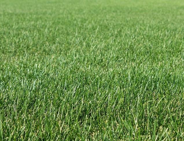 В Бурятии выросла густая трава для сенокоса