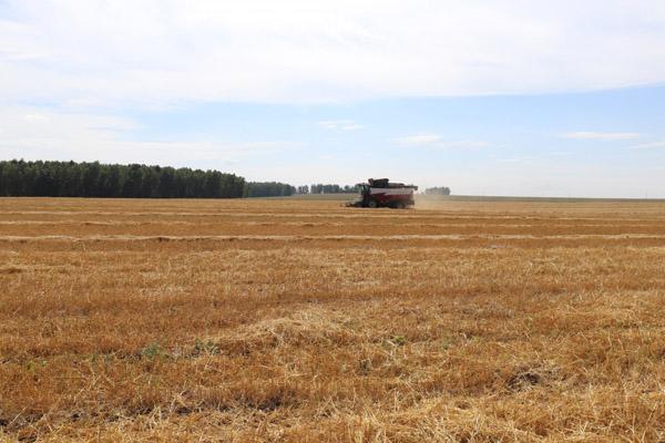 В Усть-Ордынском округе собрали зерновые и зернобобовые культуры