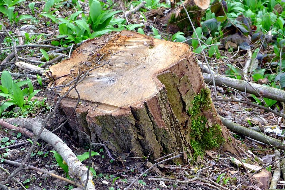 В Забайкалье лесорубов обязали очистить лес