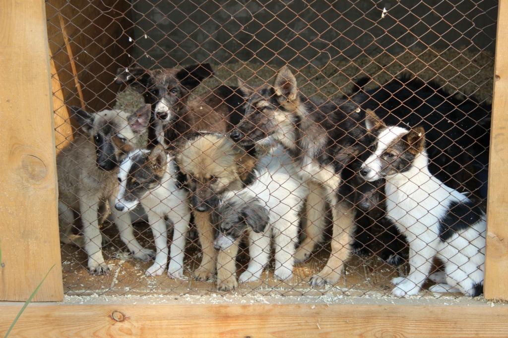 В Улан-Удэ назвали места отлова собак в августе