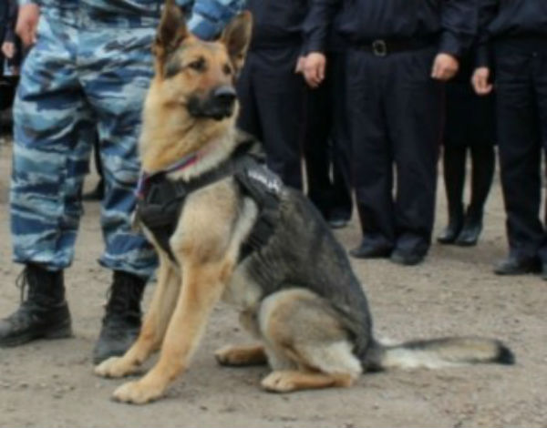 ВУлан-Удэ работники милиции погорячим следам отыскали пропавшего ребенка