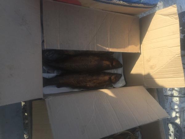 На трассе в Бурятии поймали торговцев байкальским омулем