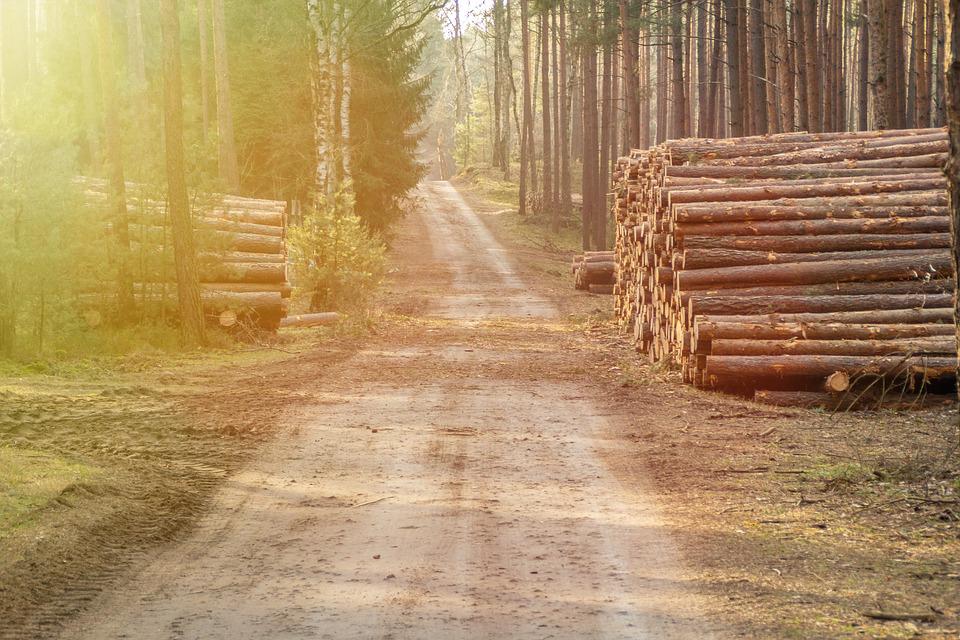 Прокуратура Забайкальского края признала эффективность работы контролирующих органов в сфере оборота древесины неадекватной