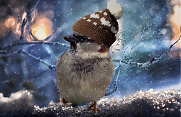 В Улан-Удэ днём мокрый снег