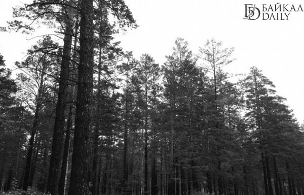 В Бурятии четверо подростков всю ночь плутали по лесу