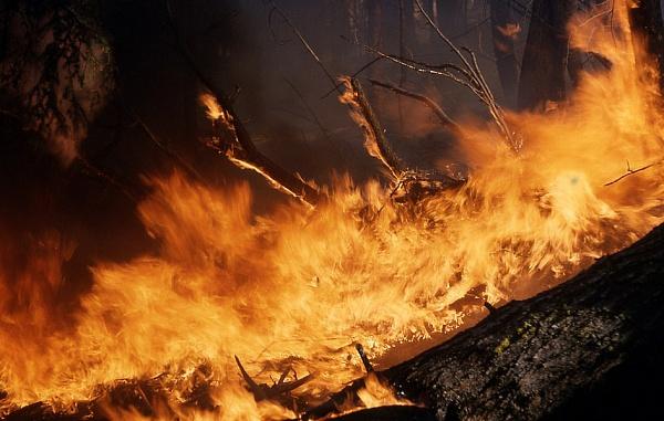ВБурятии лесные пожары охватили около 600 гекторов территории